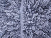 Vista de arriba de árboles nevados y del camino nevado en fotos de archivo