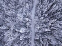 Vista de arriba de árboles nevados y del camino nevado en foto de archivo libre de regalías