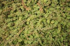 Vista de arriba media de la vegetación verde del nivel del suelo Imágenes de archivo libres de regalías