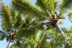 Vista de baixo nas palmeiras e do c Fundo imagens de stock royalty free