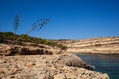 Vista de Cala Greca imagens de stock