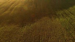 Vista de campos del aire almacen de metraje de vídeo