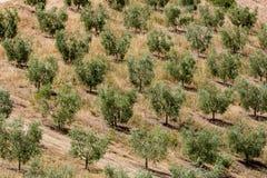 Vista de campos y de colinas toscanos en la región de Maremma en Italia Foto de archivo