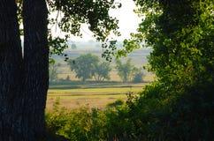 Vista de campos y de la pradera a través de árboles Fotos de archivo libres de regalías