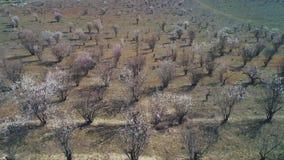 Vista de cima das árvores ou dos arbustos desencapados que começam florescer em um grande campo na mola adiantada no dia ensolara filme