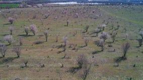 Vista de cima das ?rvores ou dos arbustos desencapados que come?am florescer em um grande campo na mola adiantada no dia ensolara vídeos de arquivo