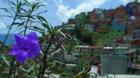 Vista de Comuna 13 Medellin Colombia, con la flor en primero plano, foco del estante metrajes