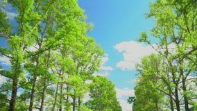 Vista de coronas y del cielo azul Los movimientos de la cámara almacen de metraje de vídeo