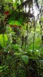 Vista de corto alcance de un la más cloudforest Fotografía de archivo