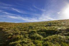 Vista de Dartmoor do trajeto à madeira de Wistmans imagem de stock royalty free
