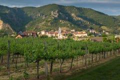 Vista de Durnstein a través de viñedos por la tarde del verano austria Imágenes de archivo libres de regalías