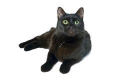 Vista de encontro do gato preto isolado acima no fundo branco Imagens de Stock