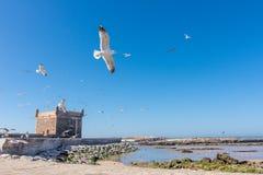 Vista de Essaouira, Marruecos Fotos de archivo libres de regalías
