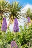 Vista de flores púrpuras con las abejas Foto de archivo libre de regalías
