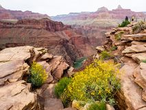 Vista de Grand Canyon com Wildflowers e rio Foto de Stock