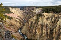 Vista de Grand Canyon de Yellowstone Fotos de archivo libres de regalías