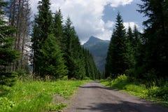 Vista de Krivan do trajeto de passeio da floresta Imagens de Stock