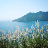 Vista de la bahía de Adrasan Estípite plumoso y mar secos - foto del vintage Imagen de archivo