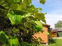 Vista de la casa de campo Fotos de archivo libres de regalías