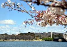 Vista de la casa del parlamento de debajo el flor del cerezo fotografía de archivo libre de regalías