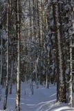 Vista de la casa en un bosque nevoso cerca de la picea y de árboles foto de archivo