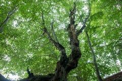 Vista de la corona verde clara del árbol de la parte inferior Fotografía de archivo