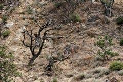 Vista de la cuesta con las piedras y los pequeños árboles fotografía de archivo