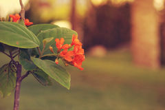 Vista de la flor anaranjada Fotos de archivo libres de regalías