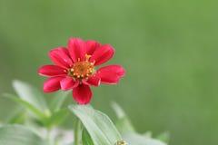 Vista de la flor roja Foto de archivo