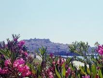 Vista de la fortaleza y de la bahía de Kavala a través de las flores nativas imágenes de archivo libres de regalías