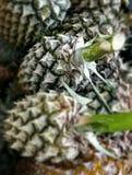 Vista de la fruta fresca de la piña en el mercado Fotos de archivo