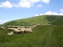 Vista de la granja de las ovejas Foto de archivo