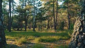 Vista de la hierba y de los árboles en el bosque almacen de video