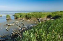 Vista de la laguna de Scardovari, delta del río Po, mar adriático, él Foto de archivo libre de regalías