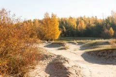 Vista de la mañana de las dunas en octubre Imagen de archivo