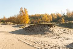 Vista de la mañana de las dunas en octubre Fotos de archivo libres de regalías