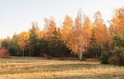 Vista de la mañana de las dunas en octubre Foto de archivo