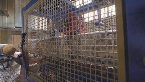 Vista de la maquinaria del corte en la serrería almacen de metraje de vídeo