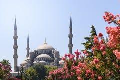 Vista de la mezquita azul Sultanahmet Camii en Estambul, Turquía Fotografía de archivo