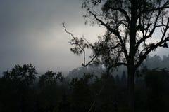 Vista de la montaña en la puesta del sol con el bosque en Imagenes de archivo