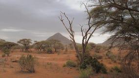 Vista de la montaña triangular en el desierto con los árboles rojos de la arena y del acacia almacen de metraje de vídeo