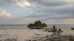 Vista de la orilla con el mar y los animales imagenes de archivo