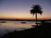 Vista de la palmera durante puesta del sol Imagen de archivo libre de regalías