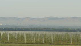 Vista de la plantación joven de los manzanos del granjero azul House almacen de video