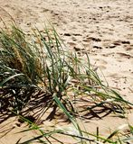 Vista de la playa arenosa y de la duna con la hierba Imagen de archivo libre de regalías