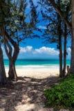 Vista de la playa hermosa con agua de la turquesa entre dos árboles en Waimanalo, Oahu fotos de archivo