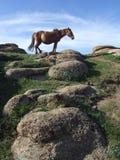Vista de la pradera Imagen de archivo