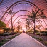 Vista de la puesta del sol púrpura en galería del jardín de la palma fotos de archivo