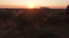 Vista de la puesta del sol roja en la sabana de Namibia almacen de video