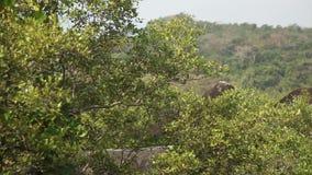 Vista de la selva en la India en Goa almacen de video